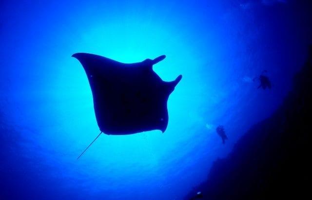 石垣島のダイビングショップおすすめ3選!見どころやポイントも紹介