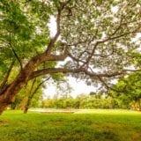 天気の良い日は代々木公園へ!楽しみ方とおすすめ厳選グルメ