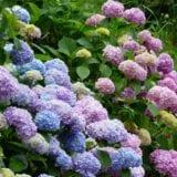 鎌倉へ紫陽花を見に行こう♪絶対おさえておきたい名所6選