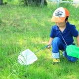 親子で昆虫採集に出かけよう!あると便利なグッズと採取のコツ