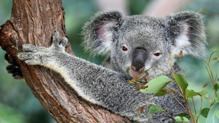 オーストラリアの女子旅におすすめの都市6選♡自然も街も楽しめる!