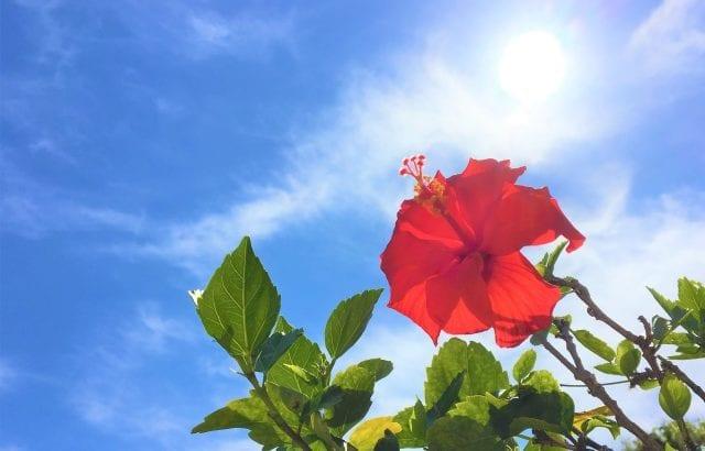 猛暑の熱中症対策は万全に!体を冷やすおすすめアイテム16選