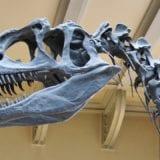 関東の人気おすすめ博物館7選!恐竜&昆虫展示で子供も大人も楽しめる