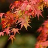 神奈川で見ておきたい紅葉の名所7選♪紅葉&観光スポットも