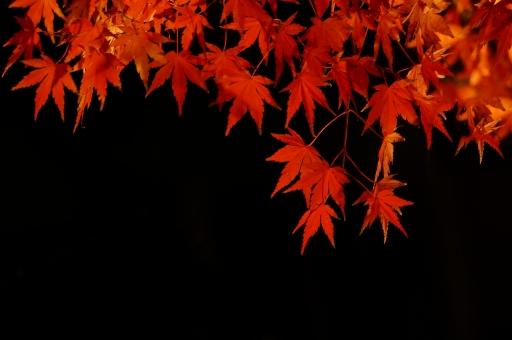関東の紅葉ライトアップ9選!デートが楽しめる美しいスポット