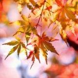 神戸や兵庫県内の紅葉を見るならここ!秋のおでかけスポット9選