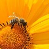 イヤな虫から身を守ろう!虫刺され対策法&おすすめアイテム
