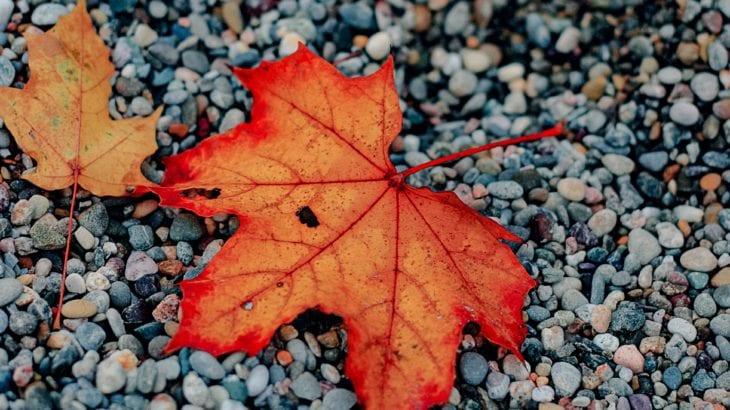 秋の海外女子旅♡カナダ・メープル街道で紅葉が楽しめる街3選