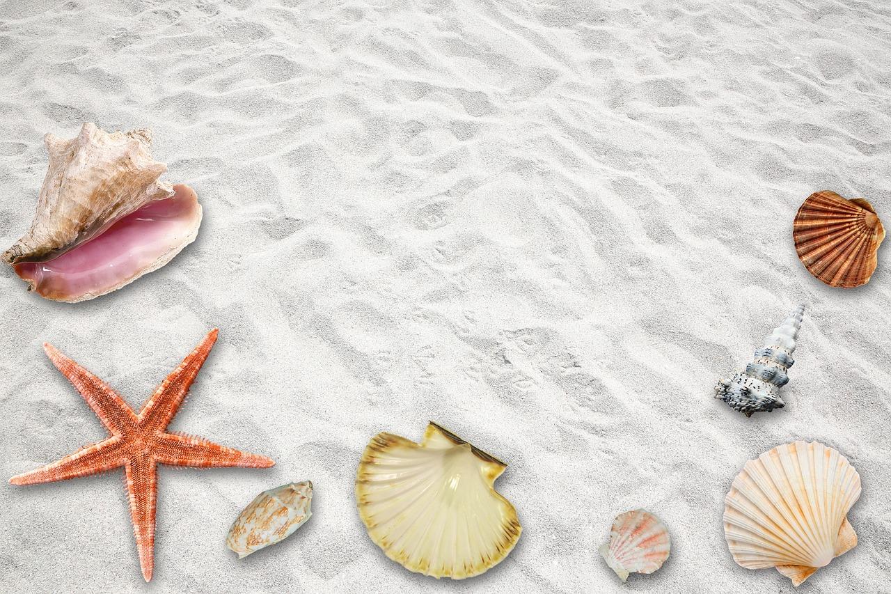 拾った貝殻をインテリアDIY|夏らしさ全開のおしゃれアイデア17選