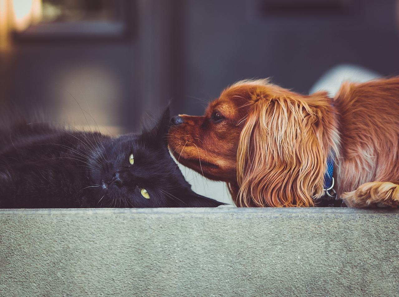 ペットの防災アイテム10選!事前に飼い主が行うべき確認事項