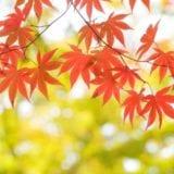 【東北】紅葉の名所5選!赤や黄色に彩られた絶景を堪能しよう