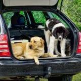 家族の一員ペットの防災対策!非常時に備える8つのポイント