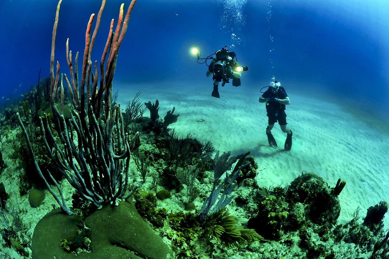 土日を満喫!伊豆の海でおすすめのダイビングスポット16選