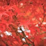 広島の絶景紅葉スポット5選!世界遺産の観光やグルメも満喫