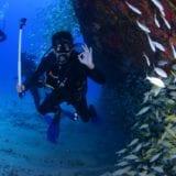 大型回遊魚の天国「勝浦」ダイビングスポットと地域のお店13選