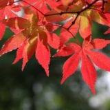 埼玉で紅葉狩り!おすすめ名所や穴場8選と近くのグルメ情報