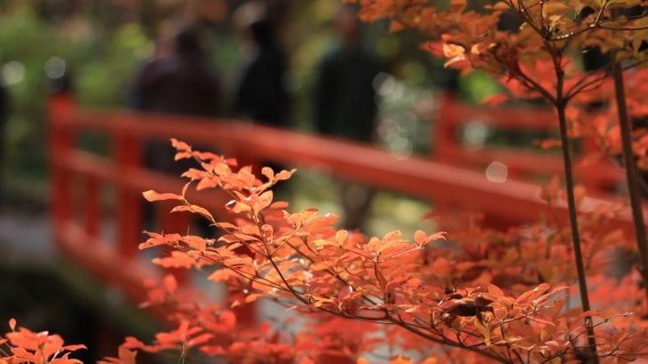 千葉で紅葉とグルメを満喫しよう!人気名所・穴場スポット8選