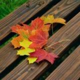 日光の美しい紅葉を見るならココ!名所8選とグルメスポット