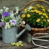初めてのガーデニングは秋冬に!8つのコツと寒さに強い花4選