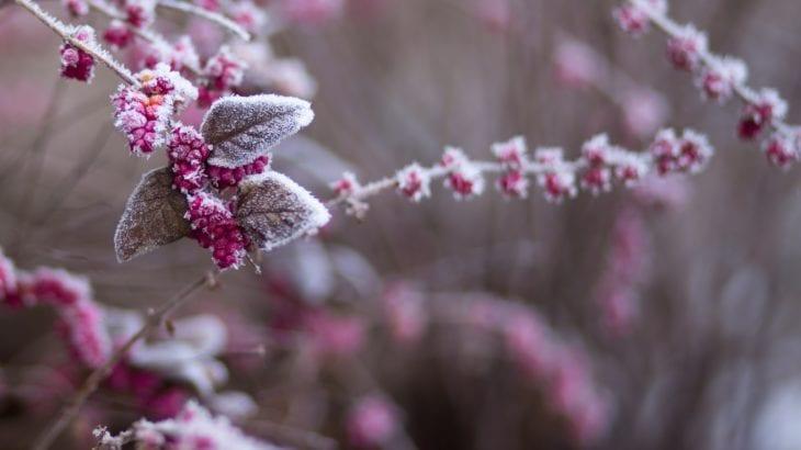 絶景冬景色を楽しもう!冬ならではの国内旅行ができる街11選