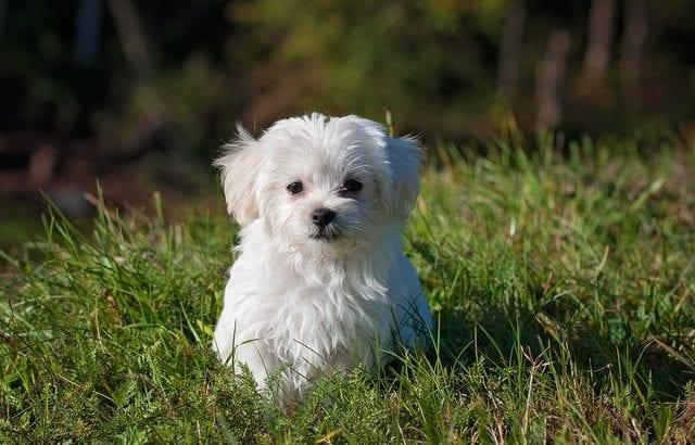 大好きな愛犬におすすめ♡可愛い&おしゃれなペットグッズ12選