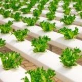 野菜の水耕栽培が楽しい♪リボべジ&キットや種からの栽培法