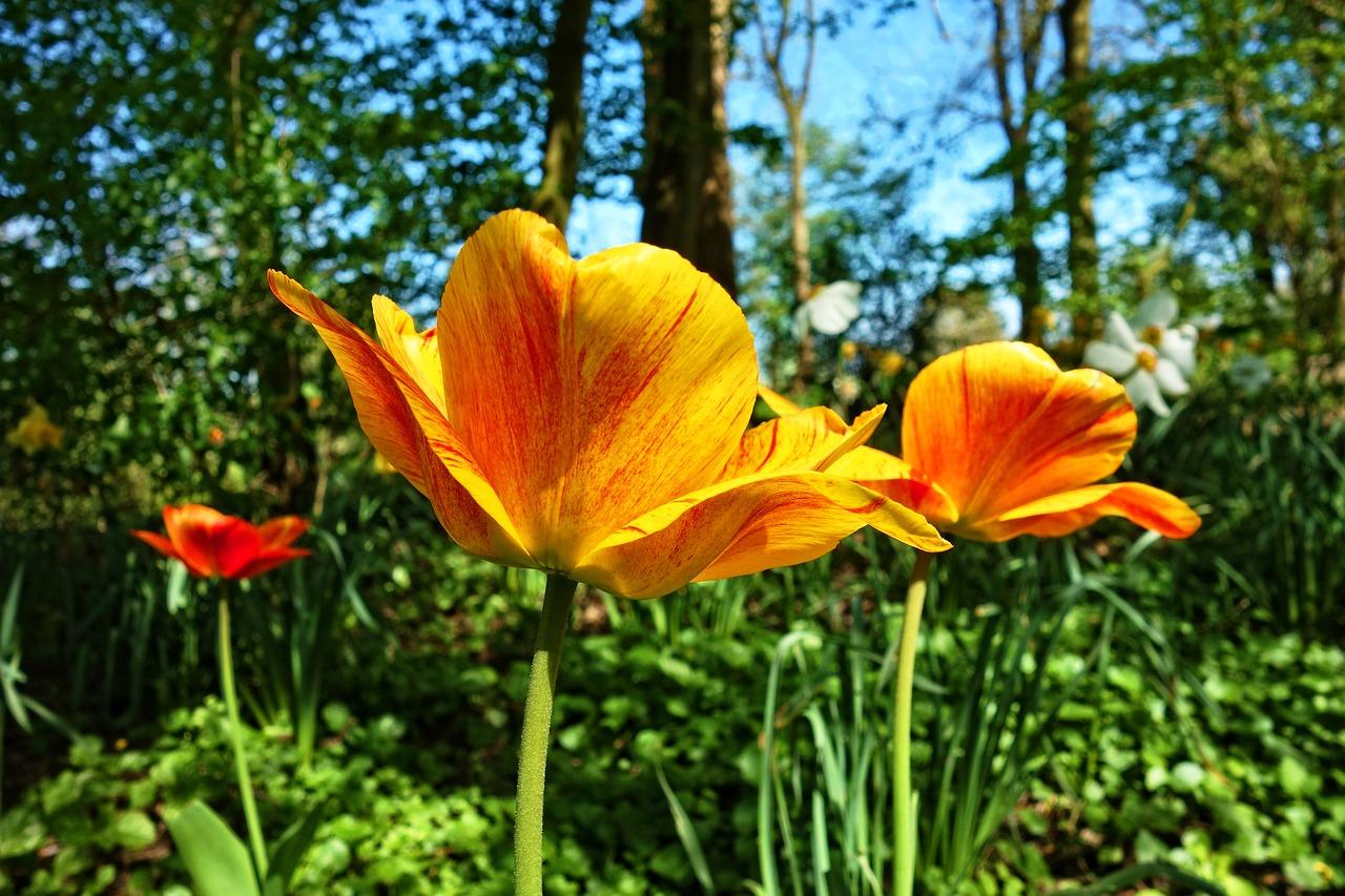 春植えの育てやすく可愛い球根7選と寄せ植え花や楽しみ方5選