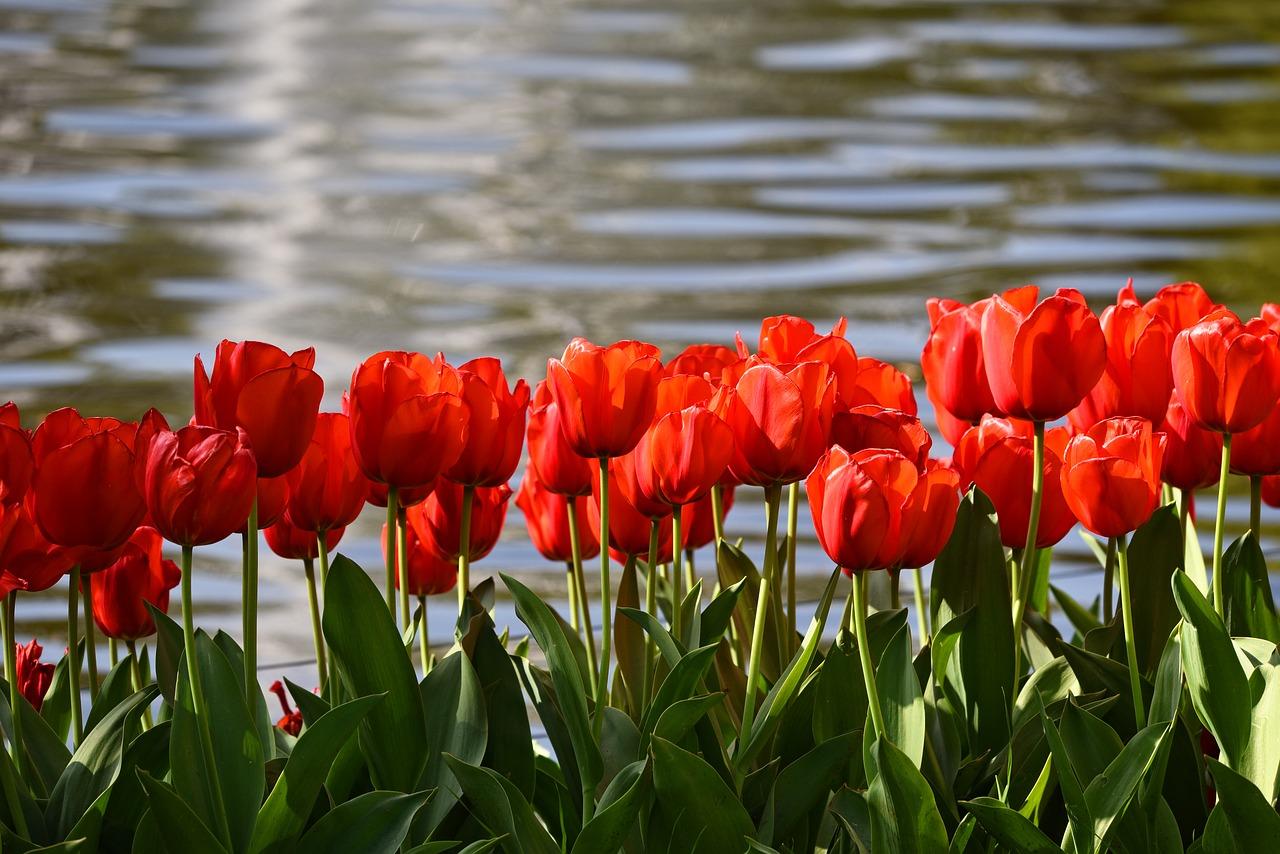 水耕栽培で可愛いお花を育てよう!コツや手順とおすすめ球根6選