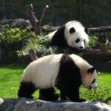 絶対行きたい!全国の動物園10選|子連れ旅行やデートにおすすめ