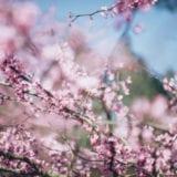 【関東】春のおでかけスポットはココ!おすすめ春まつり17選