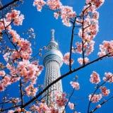 2019東京お花見は穴場へ♪のんびり楽しめるスポット6選