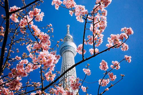 2021東京お花見は穴場へ♪のんびり楽しめるスポット15選