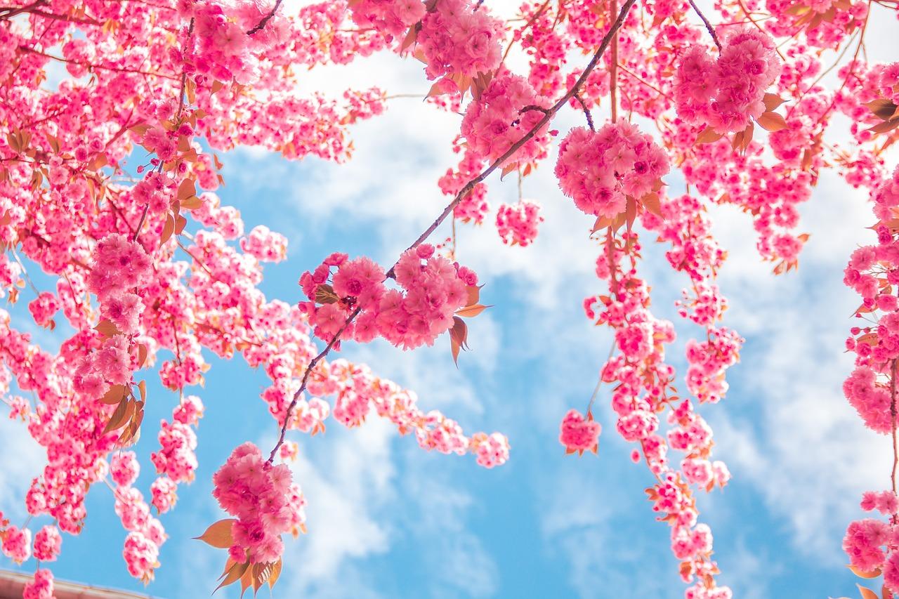 デートや家族で楽しめる関東2019一押しお花見スポット7選