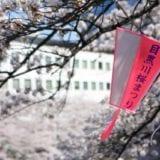 2019目黒川のお花見&撮影・立ち寄りおすすめスポット13選