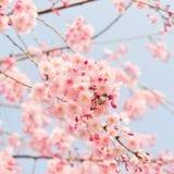 【2020|神奈川】お花見の穴場|少人数で楽しめるおすすめ9選