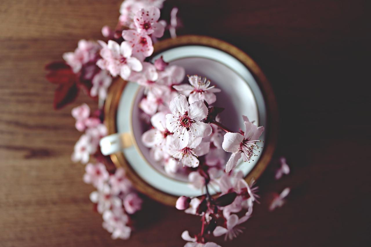 京都のお花見スポット|ゆったり桜を満喫できる場所6選