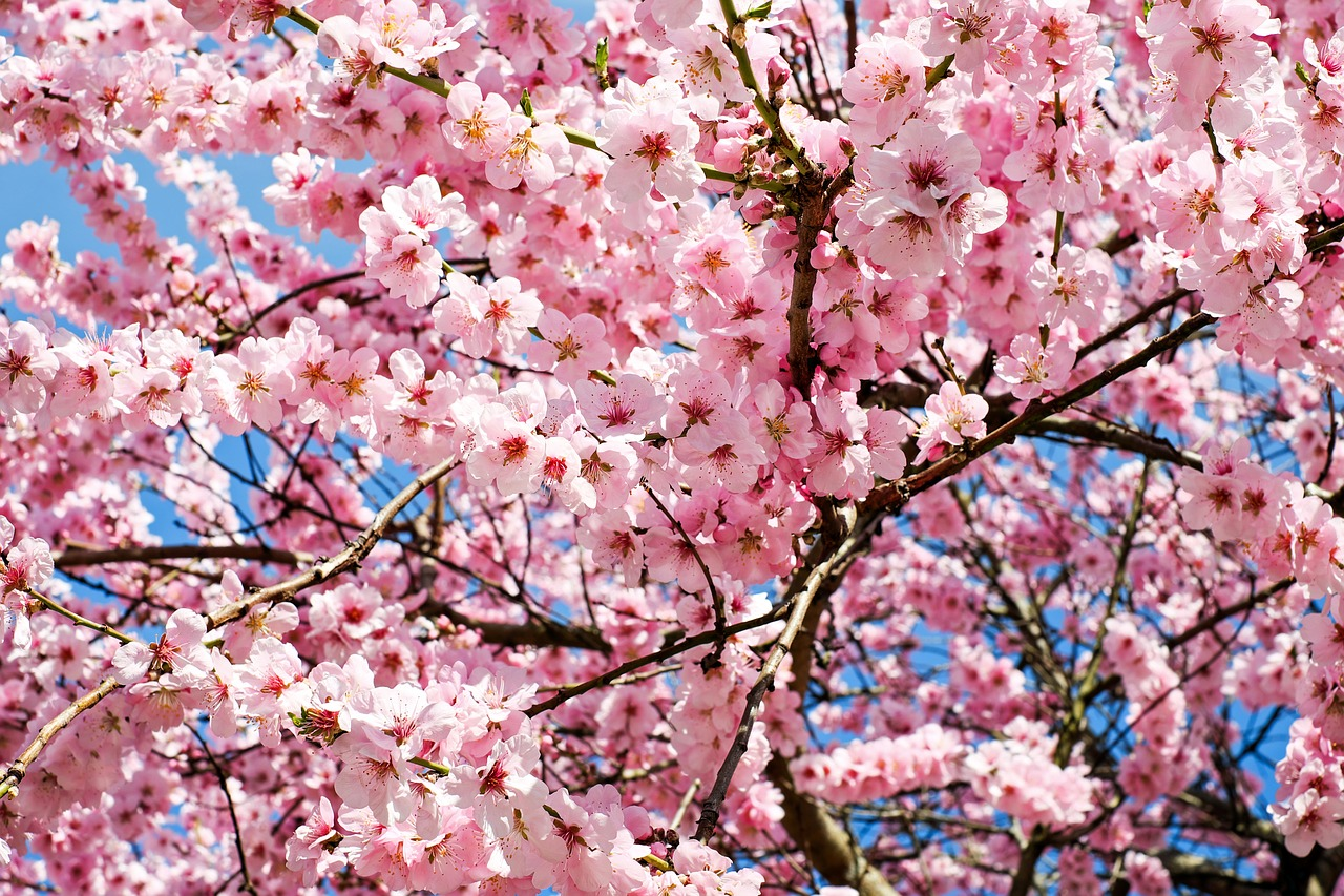 大阪のお花見は穴場でのんびり♪人気スポット16選とグルメ情報