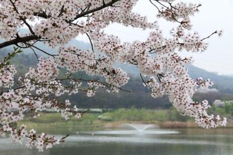 奈良の自然を味わえる穴場お花見スポット3選