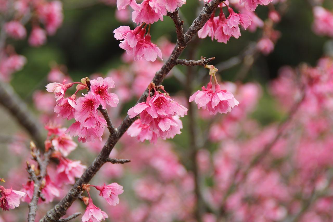沖縄でひと足お先にお花見♪大自然と歴史が楽しめるスポット8選