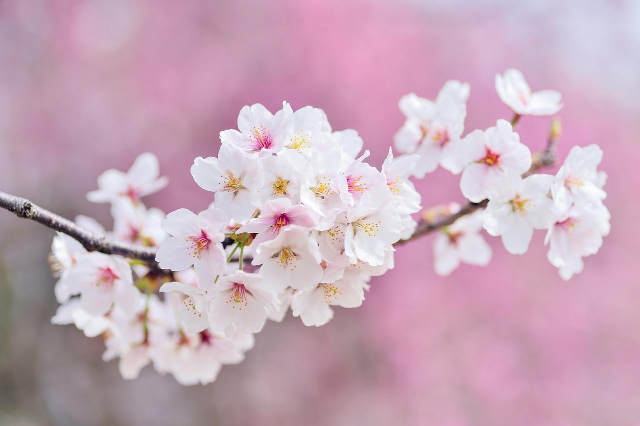 奈良のお花見は穴場で♪子連れやデートにおすすめのスポット10選