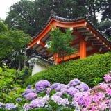あじさい寺で梅雨の京都・奈良を満喫|2019年おすすめスポットを紹介