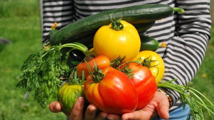 初心者でもできるベランダ家庭菜園おすすめ20選|準備と育て方