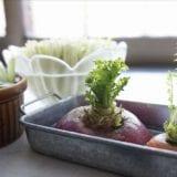 すぐできる再生野菜(リボベジ)の育て方とおすすめ15選