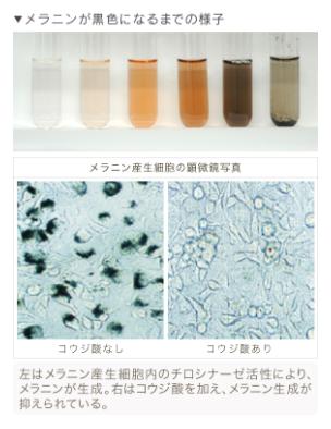 コウジ酸 コウジ菌が作る物質