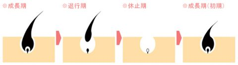 毛周期 リゼ