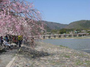 嵐山山の緑と桜のコントラストが楽しめる