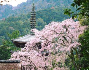 醍醐寺|秀吉も愛した花見の名所