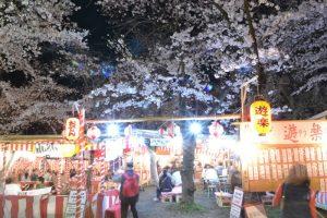 平野神社さまざまな桜が一斉にライトアップ