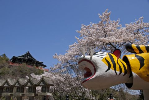 キュートな寅と桜の共演「信貴山朝護孫子寺」