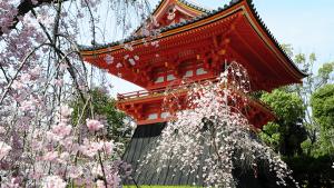 仁和寺|江戸時代からの変わらぬ景色